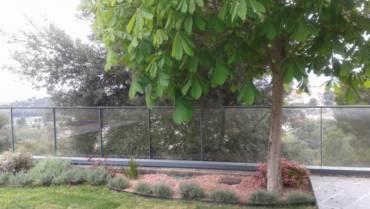 Diseño de jardín sin riego